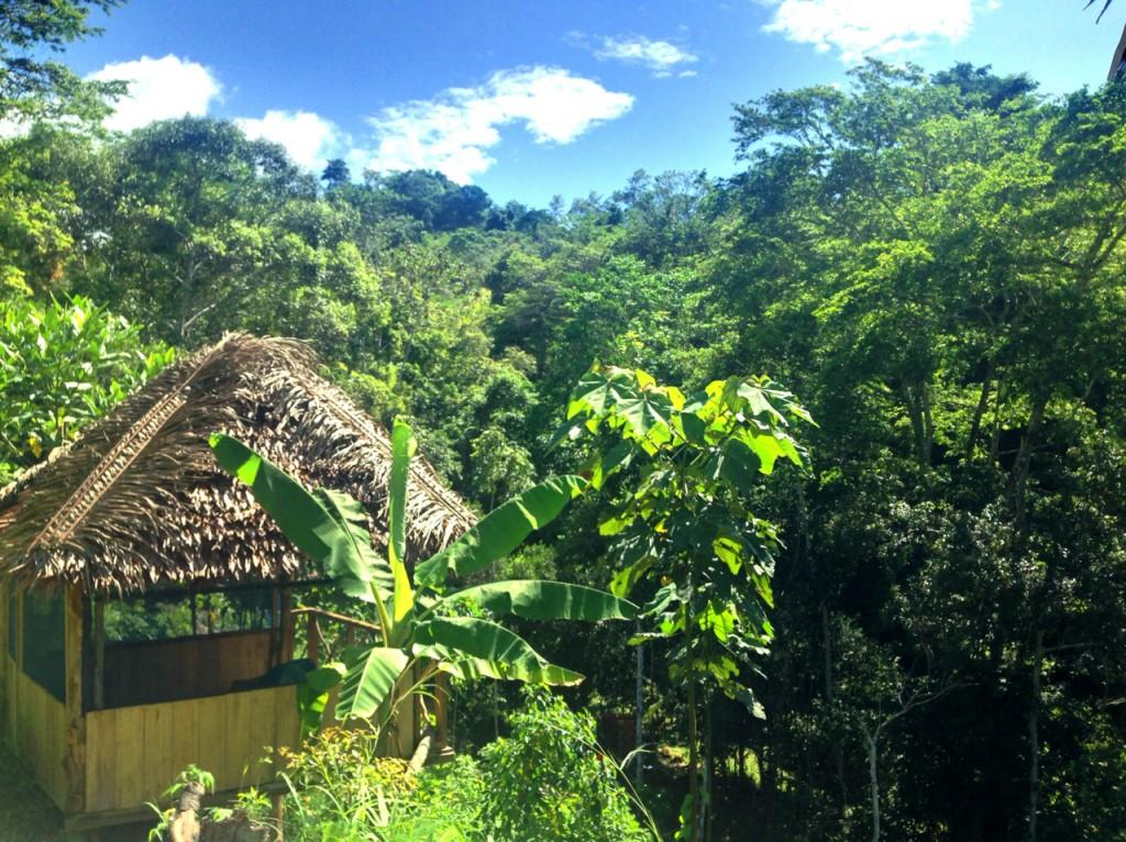 Ayahuasca Retreat Center - Tambo